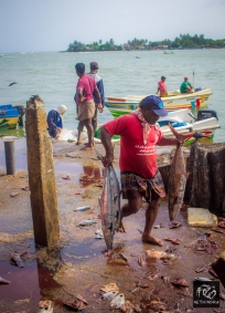 A Fisherman carrying his catch into the Market